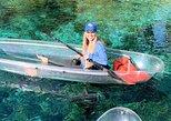 Excursiones en kayaks transparente por Rainbow Springs,