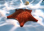 Cozumel Snorkeling Tour: Palancar, Colombia and El Cielo Reefs,