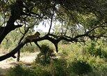 Day Trip Selous Safari Tour from Zanzibar, Zanzibar, TANZANIA