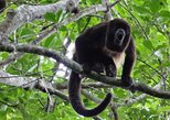 Guayaquil to Manglares Churute and Cacao Route Tour,