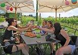 Wine and Food Tasting in the Vineyards in Lazise, Lago de Garda, ITALIA