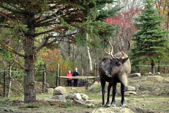 Zoo y ecomuseo: descubra la flora y fauna de Quebec en verano, Montreal, CANADA