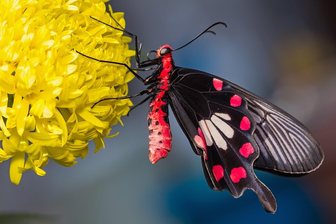 Located in Singapore's Sentosa Island, surrounded with lush tropical greenery, Butterfly Park & Insect Kingdom showcases the stunning beauties of a different variety of beautiful butterflies and interesting insects.