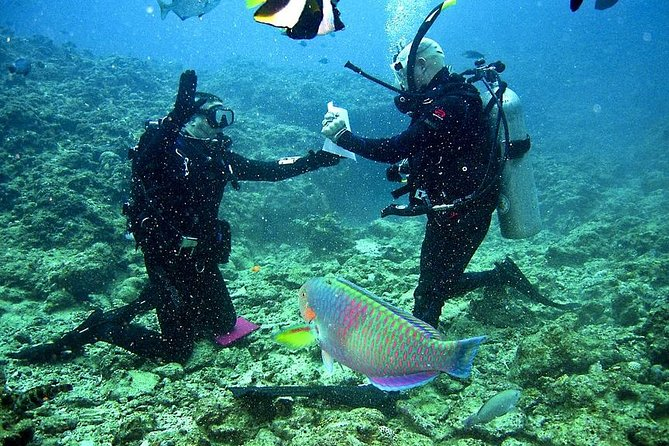 Discover Scuba Diving in Falmouth, Trelawny, JAMAICA