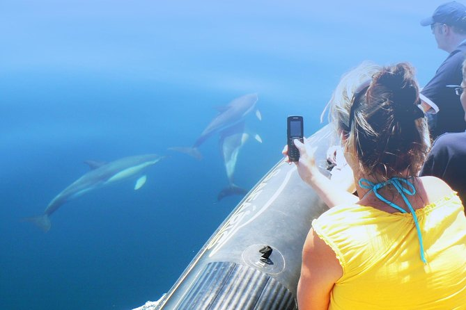 Dolphin Watching and Cave Tour from Vilamoura, Albufeira, PORTUGAL
