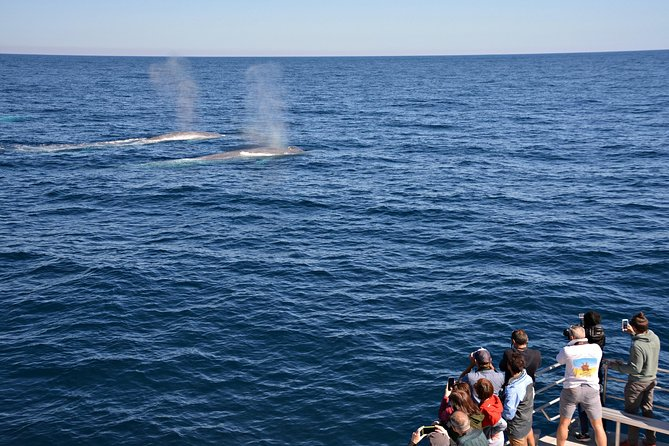 Blue Whale Perth Canyon Expedition, Fremantle, AUSTRALIA