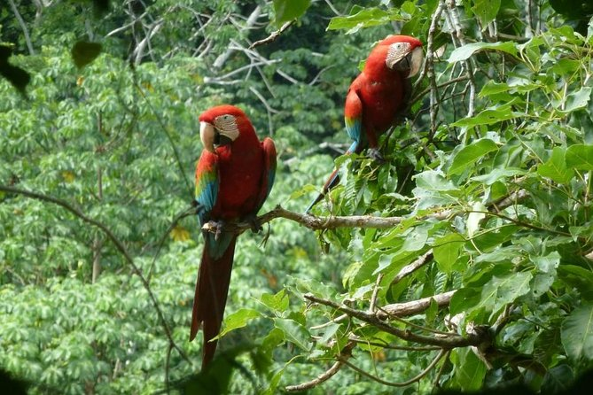 MÁS FOTOS, 5-Day Madidi and Pampas Amazon from La Paz