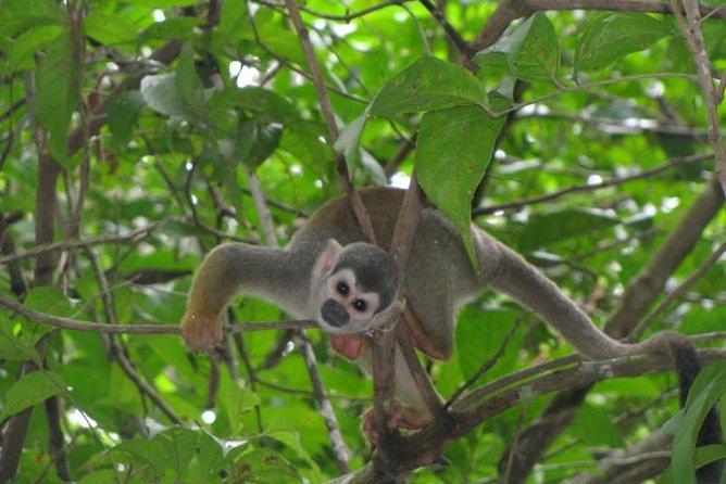 MÁS FOTOS, 5-Day Cuyabeno Amazon Eco-Lodge Adventure