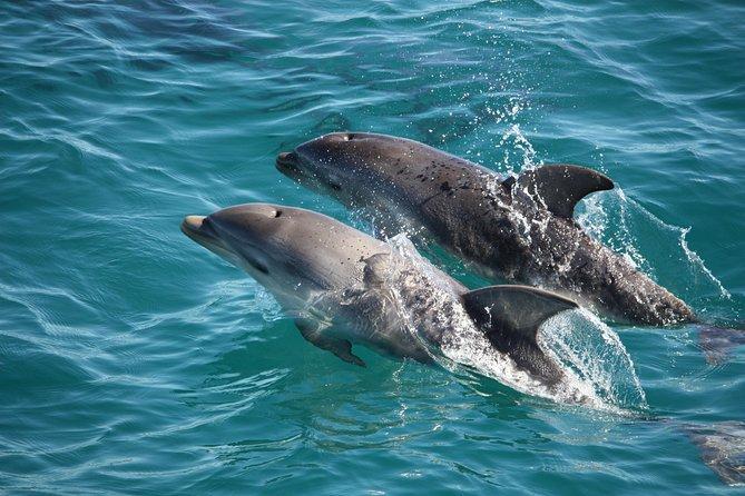MÁS FOTOS, 3-Hour Dolphin and Seal Sightseeing Cruise, Mornington Peninsula