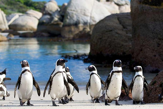Private Tour: Cape of Good Hope and Cape Point from Cape Town, Cape Town, South Africa