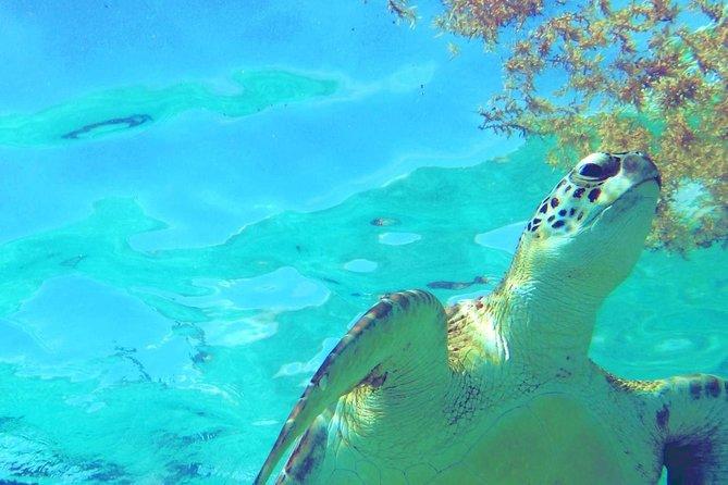 Excursão de aventura com snorkel nos Três Ecossistemas, Tulum, MÉXICO