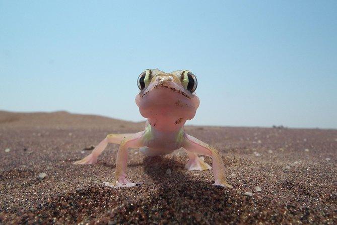 Living Dunes Experience from Swakopmund, Swakopmund, NAMIBIA
