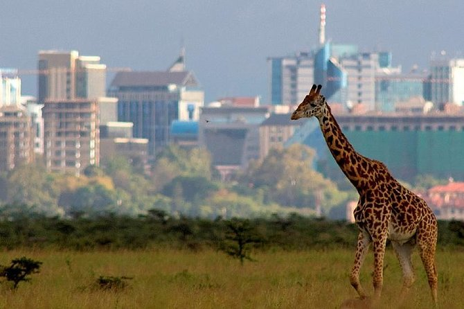 Welcome to the Wildlife capital, Nairobi National Park. This is the nearest wildlife park to a capital city. If you have a short period in nairobi, Kenya and would like to experience wildlife, this is the best trip to do. Lunch is at the world famous Carnivore Restaurant.