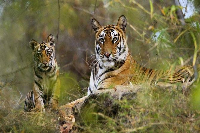 Panna Reserve is located in Madhya Pradesh State in the Vindhy Hills along Ken River. If you are a nature lover and have a passion for wildlife, this tour product befits your need. This product gives you an opportunity to be in the lap of nature for couple of hours and encounter the Wildlife such as Sambar, cheetal, langoors, chinkara etc. If you are lucky enough you can spot the Royal Bengal Tiger. This tour package combines the nature and the historic aspects of touring. As in the afternoon you also get to see the famous erotic temples in Khajuraho.