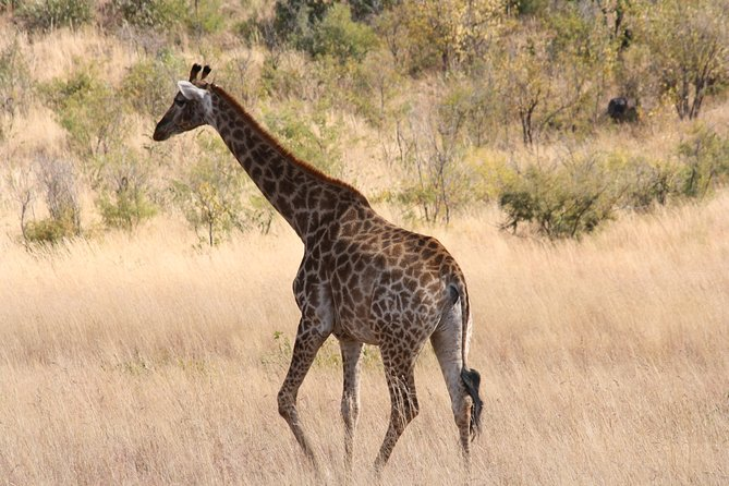 Safári de dia inteiro no Parque Nacional de Pillanesburgo saindo de Johanesburgo, ,