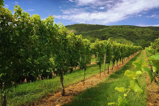 This 5-hour, private custom tour features 3 to 4 winery visits, tasting room recommendations, chilled bottled water, and an experienced personal Wine Trail guide. Add-on lunch options are available after reserving your tour. Inquire with our team to learn more, after reserving, to learn about food options and pricing.