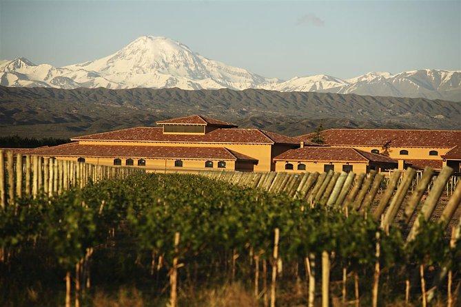 Tour del vino con almuerzo desde Mendoza, Mendoza, ARGENTINA