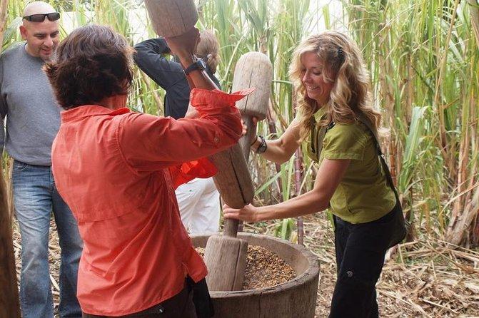 Excursión de café, chocolate y caña de azúcar en Monteverde, Monteverde, COSTA RICA