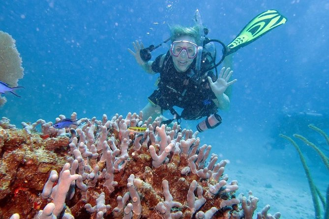 MÁS FOTOS, 2-Tank Discover Scuba Diving Check in at 7:30am