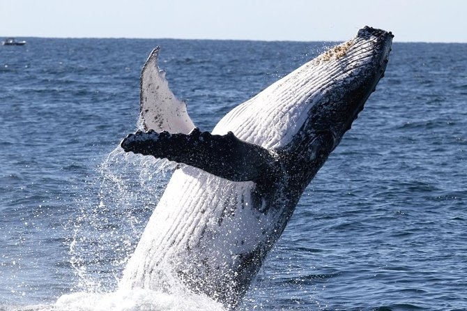 PRE-SEASON SALE! Spirit of Gold Coast Whale Watching, Gold Coast, AUSTRALIA