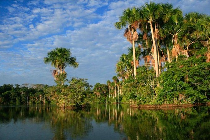A trip to the Tambopata National Reserve should not be missed even if you do not have a lot of time. That is why we have created this 2 day - 1 night tour to the Amazon where you will enjoy the best of the rainforest! You will be able to observe many different species of plants and animals, as well as enjoy our exciting jungle excursions.