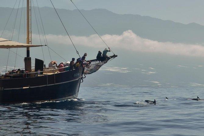4-Hour Boat Trip by the Coastline in La Palma, La Palma, ESPAÑA