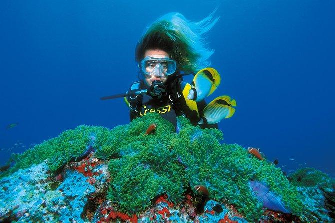 PADI Discover Scuba Diving in Montego Bay, Montego Bay, JAMAICA