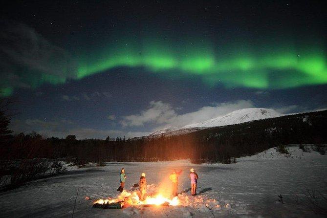 Northern Lights Tour Including Photos Under the Lights in Tromso, Tromso, NORUEGA