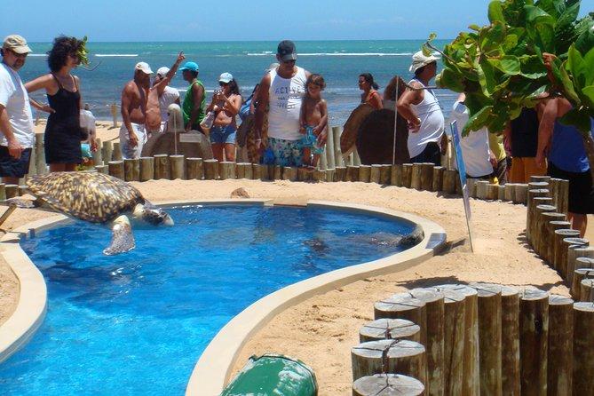 Tour por el dia a Praia do Forte desde Salvador de Bahía., Salvador de Bahia, BRASIL