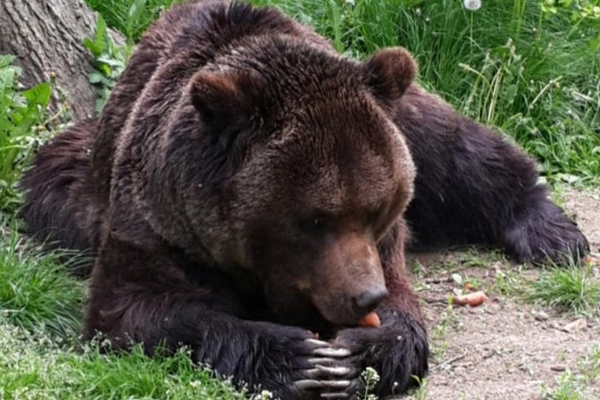 Private Day Tour to the Bears Sanctuary-Rasnov Rasnov-Bran Castle. In this escorted private day trip we invite you to discover the bear's world and two of the most important tourist attractions of Romania. You will visit The Bears Sanctuary, the famous medieval Bran Castle and the mysterious Rasnov Fortress. <br><br>You'll meet your English speaking guide at your hotel in Brasov at 9 am. You will learn emotional stories about the brown bears born in captivity at the Bears Sanctuary and your guide will tell frightening stories about Vlad the Impaler Dracula. You will visit Bran Castle and discover the truth behind the legend! Lunch can be arranged in Bran Village. <br><br>Visit the astonishing Rasnov Fortress on the way back to Brasov. You will have the chance to see a wonderful 360-degree panorama over Barsa Land from the top of Rasnov Fortress. Transfer to your hotel in Brasov.