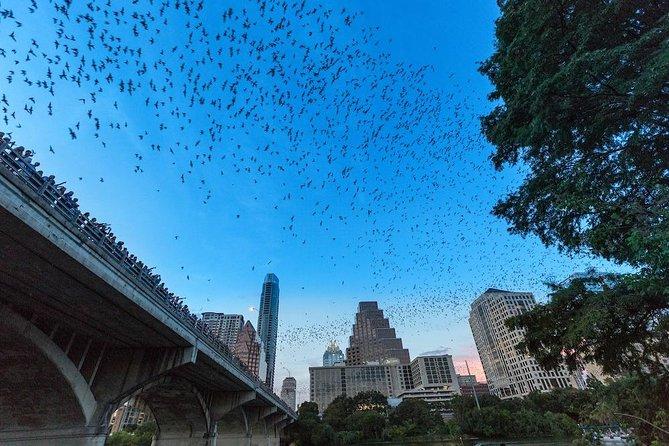 Excursión en kayak al avistamiento de murciélagos del puente de la avenida Congreso en Austin., Austin, TX, ESTADOS UNIDOS