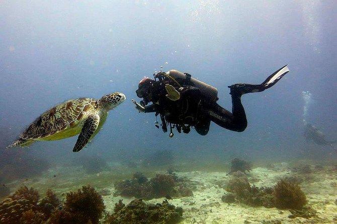 Bohol Dive Courses, ,