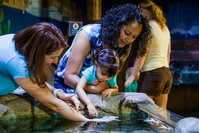 Skip the Line: SEA LIFE Scheveningen Admission Ticket in The Hague, The Hague, HOLLAND