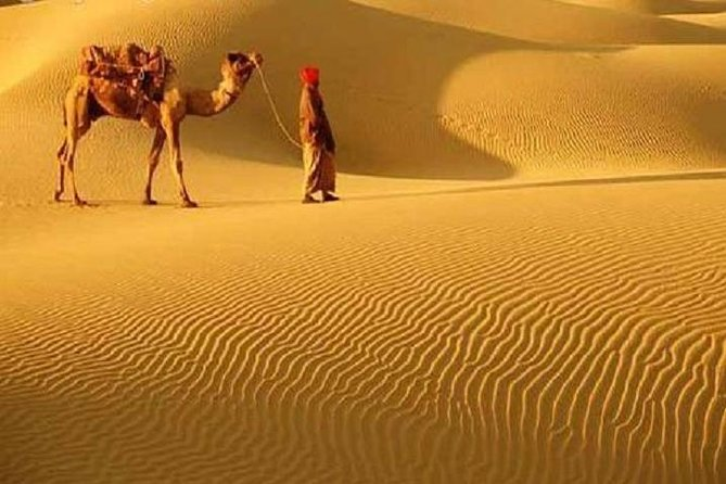 This guided desert safari on camels near Bikaner familiarizes the visitor with the unique landscape, flora and fauna of the Thar Desert. The environment supports a  diversified group of species, such as lizards, snakes, deers, the Great Indian bustard, Blackbuck and the Indian Gazelle among others. High tea and folk music are part of this excursion.<br><br>Highlights<br> • Camel ride<br> • Thar desert flora & fauna<br> • Local village life<br> • High Tea with folk music