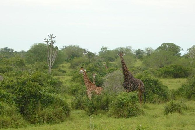 Kissama National Park Overnight Tour from Luanda: 2 days 1 night, Luanda, ANGOLA