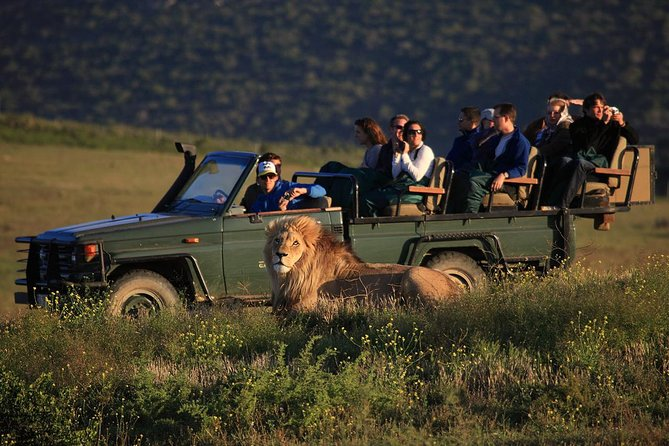 An absolute highlight from Cape Town! This 2 day safari includes an overnight at the Garden Route Game Lodge where we do 2 x Safari drives viewing elephant, lion, Rhino, giraffe, hippos and much more!