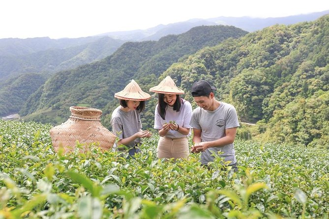 Private 1-Day Tea Experience in Taipei, Taipei, TAIWAN