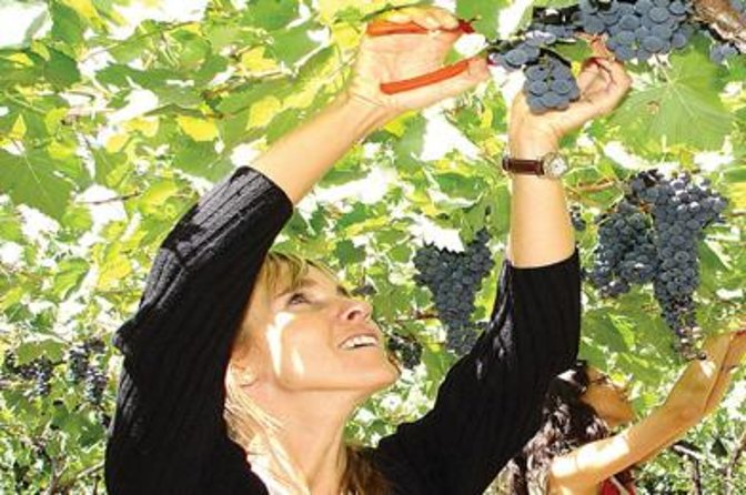 Half-day luxury wine tasting tour in Mendoza, Mendoza, ARGENTINA