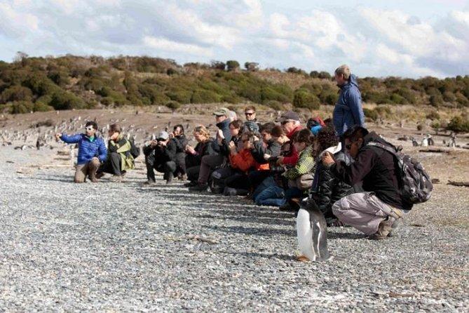 Camine con los pingüinos en Isla Martillo, Ushuaia, ARGENTINA