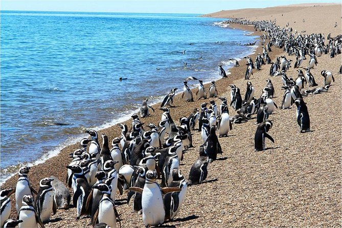 Punta Tombo is one of the most famous and visited coasts along the eastern coast of Argentinean Patagonian. You'll surely be amazed by one of the most fascinating shows in nature: the Magellan penguin continental colony. Get ready for a day of fun and adventure through northern Patagonia.