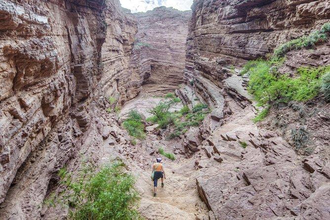 Excursión de un día a los Valles Calchaquíes y a la bodega de Cafayate desde Salta, Salta, ARGENTINA