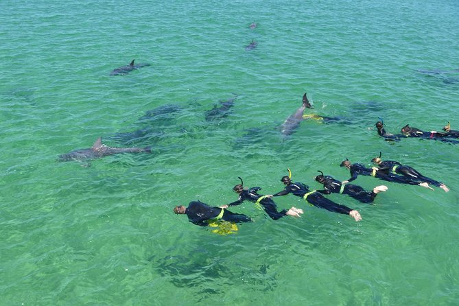 Swim with Dolphins Day Trip from Perth, Perth, AUSTRALIA
