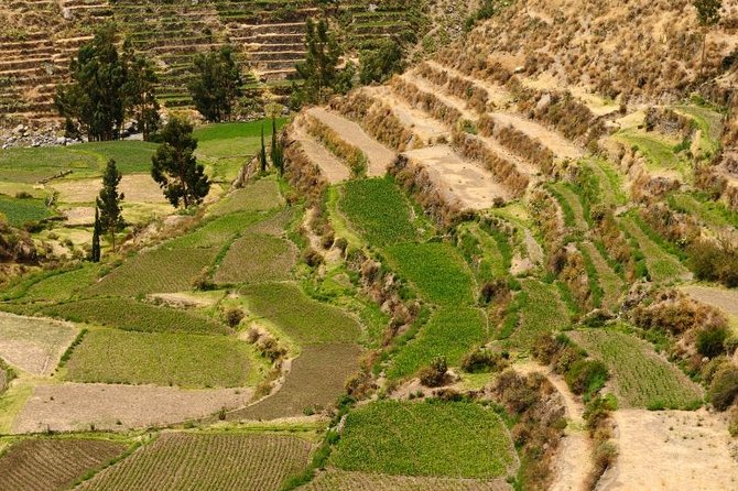 See what lies outside central Arequipa on this half-day private tour of the countryside. With a private guide, learn about the region's farming history and see the intriguing farming terraces of Paucarpata; visit the Sabandia Mill; tour the Founder's Mansion; and enjoy a wonderful panoramic view from Sachaca. Transport by private minivan will ensure your comfort on this morning or afternoon tour.