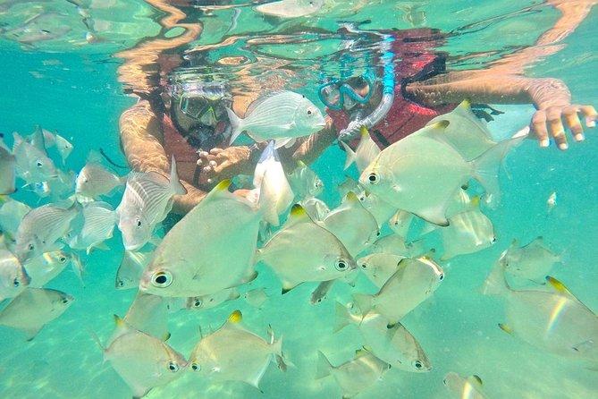 Wave break Island water Bike & Snorkeling Tour with nibbles, Gold Coast, AUSTRALIA