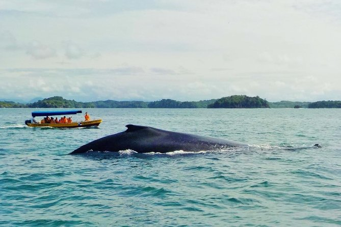 MÁS FOTOS, Whale Watching (July 15 to Oct.15) Island Tour in the Gulf of Chiriqui 3 minimum