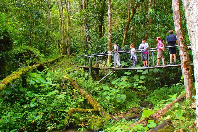 MÁS FOTOS, Cloud Forest Wildlife Hike 8:30am (Minimum of 3 people per booking is required)