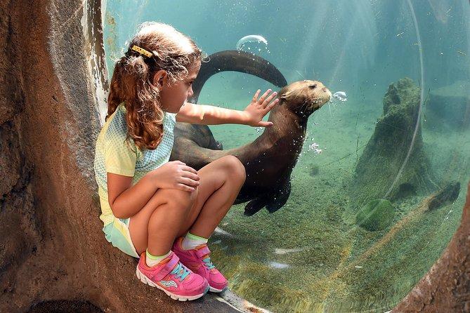 Entrada geral para o zoológico Zoo Miami com upgrade opcional para andar de monotrilho e alimentar os animais, Miami, FL, ESTADOS UNIDOS