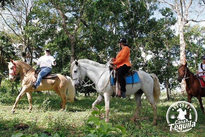 MÁS FOTOS, El mejor recorrido a caballo de República Dominicana