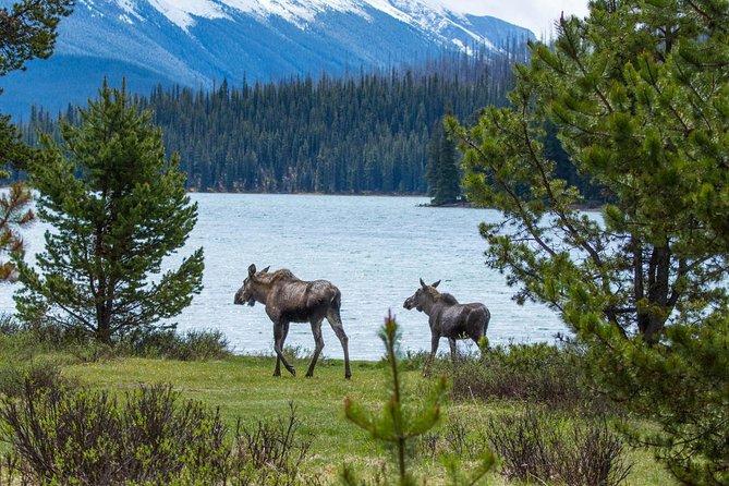 MÁS FOTOS, Jasper Wildlife and Waterfalls Tour with Maligne Lake Hike