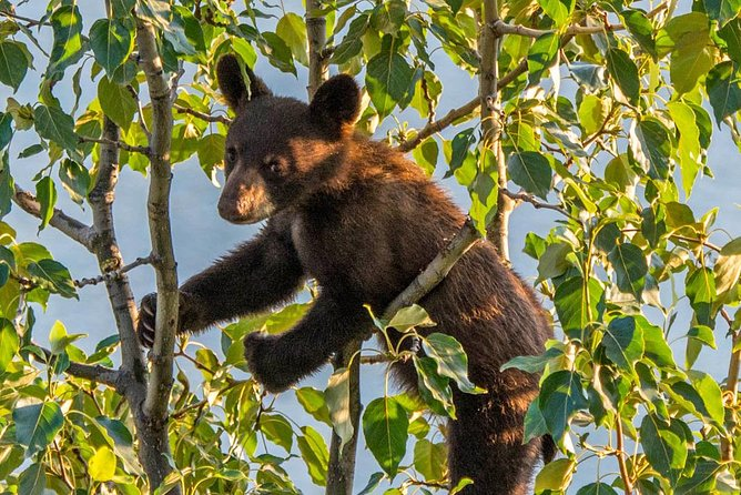 MORE PHOTOS, Jasper Evening Wildlife Tour